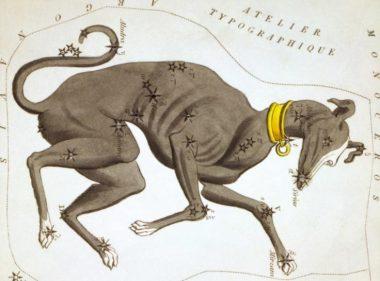 Siriusdog-star